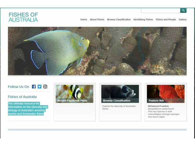 Bild der Website Fishes of Australia